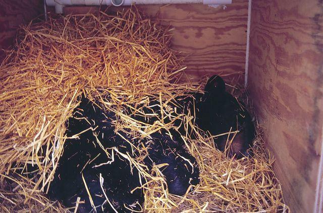 Téli álmot alvó állatok óvodai foglalkozás